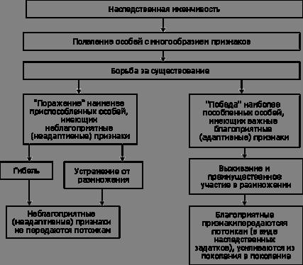 Реферат Эволюция и естественный отбор БОЛЬШАЯ НАУЧНАЯ БИБЛИОТЕКА Существует множество причин ограничивающих рост численности животных это и природно климатические факторы и борьба с особями своего и других видов 6